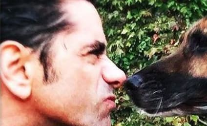 John Stamos Mourns Dog, Elicits ALL the Tears