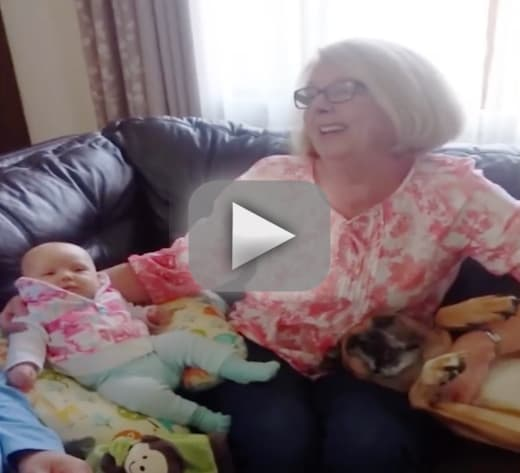 Dog refuses to let grandma hold newborn insists hes the baby