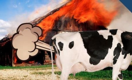 Cow Farts Cause Barn Explosion