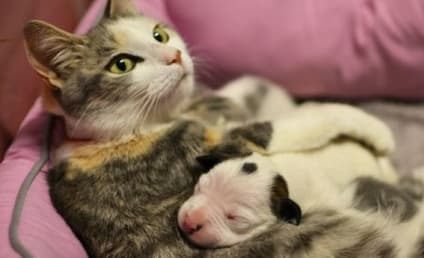 Cat Adopts Puppy, Wins Grant For Charity