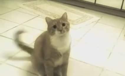 Mylo: Just a Cat, Doing Cat Stuff