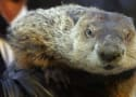 Groundhog Day 2014 Prediction: SHADOW! Winter to Continue, Punxsutawney Phil Decrees!
