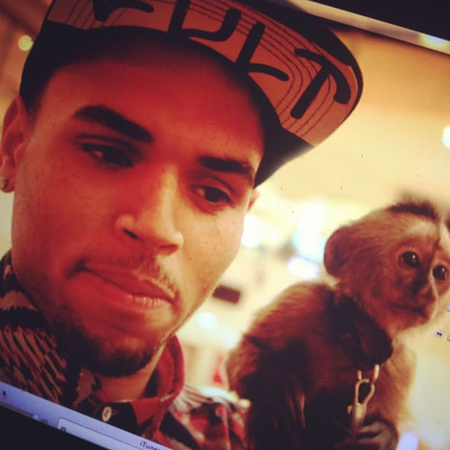 Chris Brown, Chimp