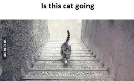 Cat Stairs Photo