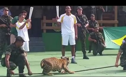 Amazon Jaguar Shot, Killed After Olympic Ceremony: Why?!