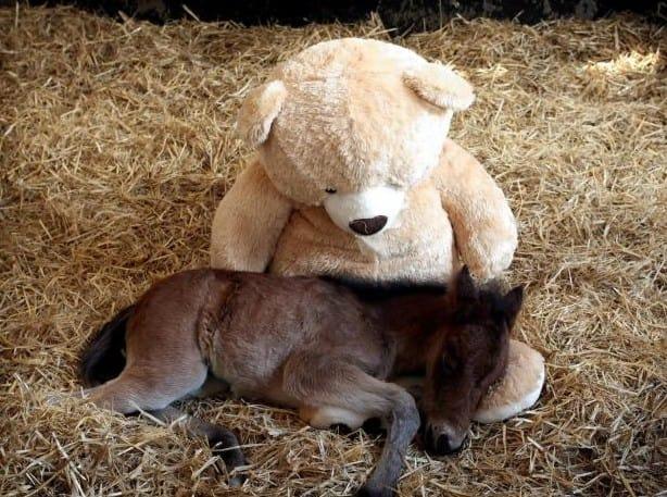 Bear Comforts Horse