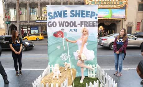 Courtney Stodden: Stop Wearing Wool!