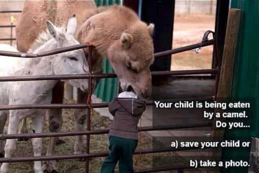 Camel Eating Kid