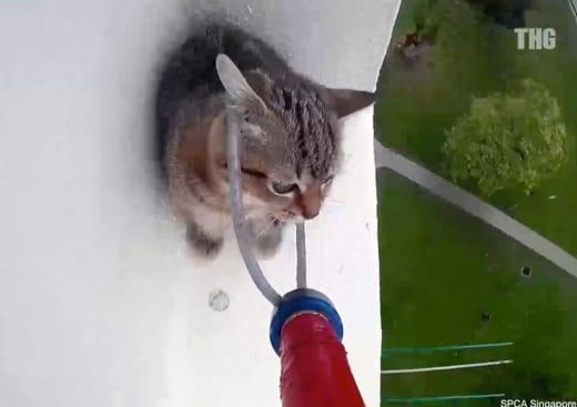 cat rescue 1