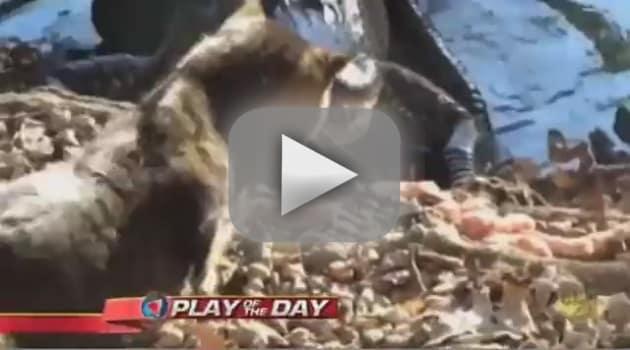 Cat Takes on Alligator