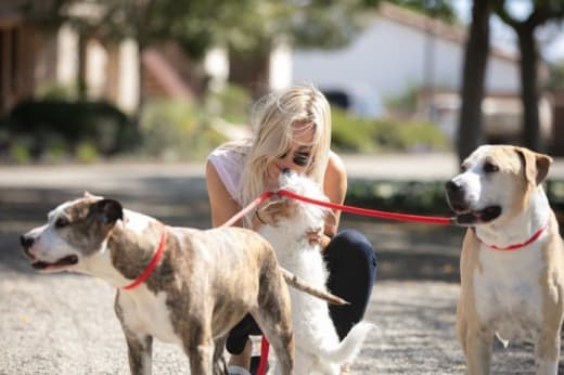 Kaley Cuoco with Dogs, Before Her Wedding