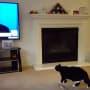 Cat Sees Donald Trump