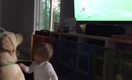 Dog Ignores Baby, Just Wants to Watch Women's World Cup