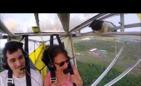 Cat Falls Asleep on Airplane Wing, Actually Takes to the Sky