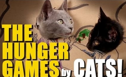 Cats Recreate The Hunger Games with Cardboard: Watch Now!