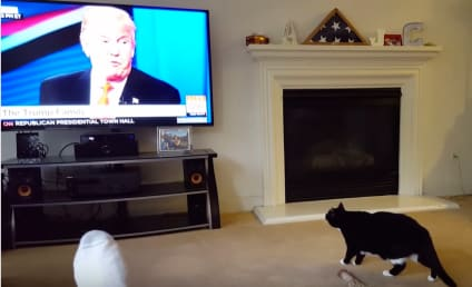 Cat Sees Donald Trump on Screen, Flees in Terror