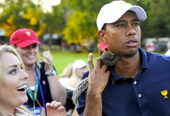 Lindsey Vonn, Squirrel, Tiger Woods