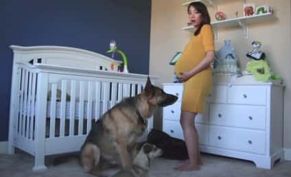 Time-Lapse Video Features Dogs Awaiting Arrival of Tiny Owner