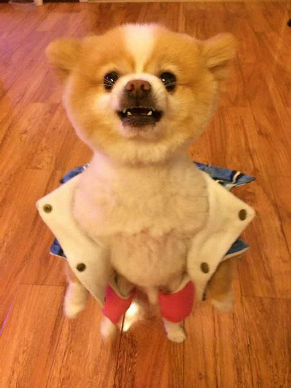 Dog Wardrobe Malfunction