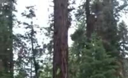 Dog Does Best Ninja Impression, Runs Directly Up Tree Trunk