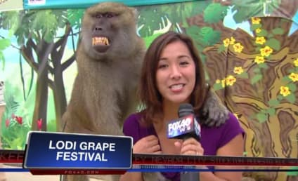 Baboon Grabs Reporter's Breast During Live Segment