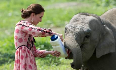 Kate Middleton Feeds a Baby Elephant