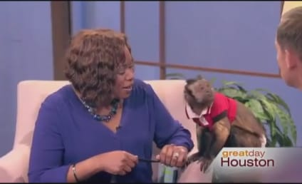 Monkey Slaps Morning Show Host in the Face: Watch Now!