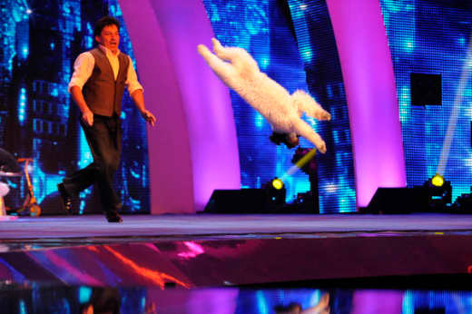Olate Dogs on America's Got Talent