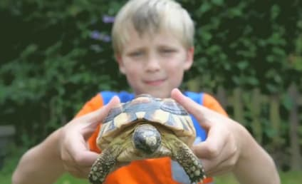 Tortoise Escapes Home in Great Britain, Travels Half Mile in Five Days