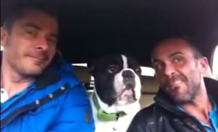 """French Bulldog Sings Josh Groban, Joins Owners for Collaboration on """"Raise Me Up"""""""