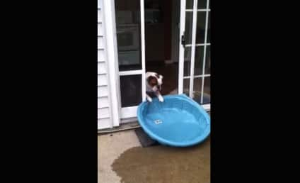 Genius Bulldog Empties Pool, Drags New Toy Inside