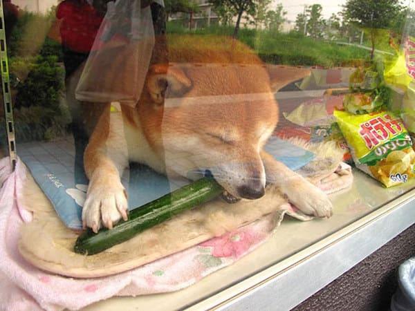 Cucumber Break!