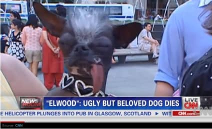World's Ugliest Dog Dies, Goes to Great Kennel In The Sky