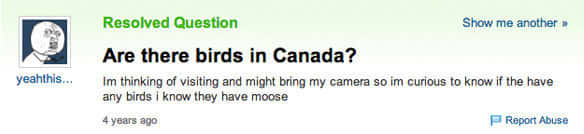 Canadian Birds? Are Those a Thing?
