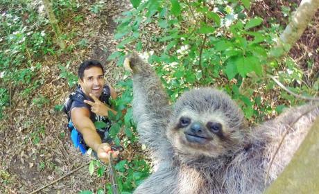Sloth Selfie!