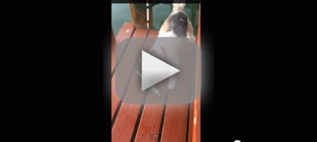 Fish Scares Heck Out of Dog