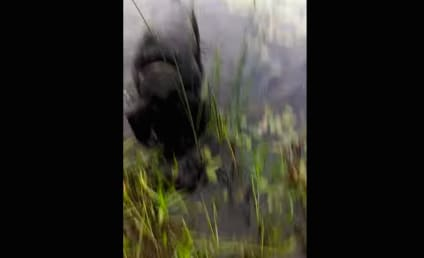 WHOA! Hunting Dog Rescues Baby Bird from Drowning