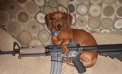 Dog Shoots Owner, Unlikely to Face Criminal Charges