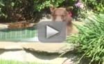 Bear Takes Over Man's Hot Tub, Drinks His Margarita, Becomes Internet Darling