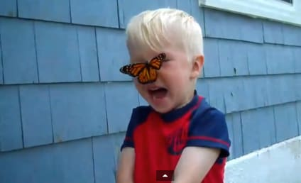 Butterfly Lands on Little Boy's Nose, Elicits Precious Reaction