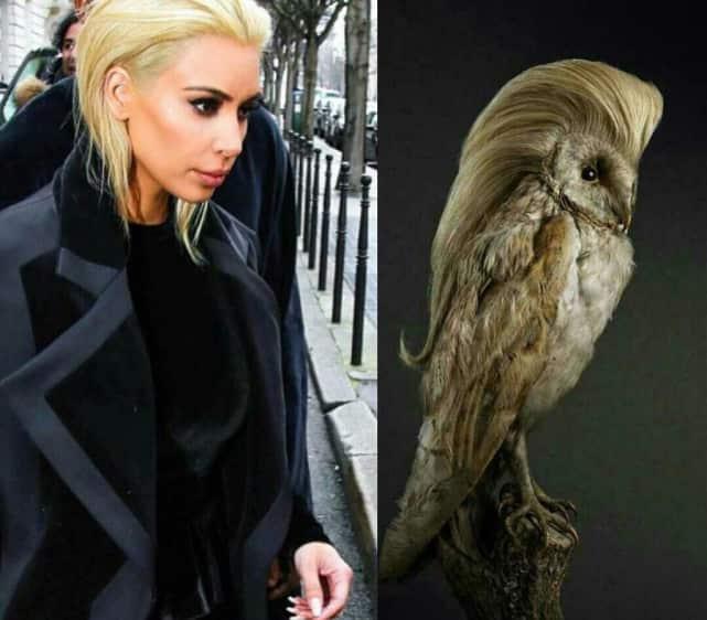 Kim Kardashian as an Owl