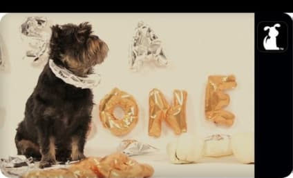 Furred Lines: Dogs Cover Robin Thicke Hit