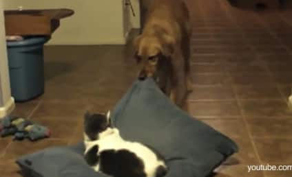 Cats Steal Beds, Dogs Get Pissed: A Montage