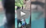Bear Jumps for Joy with Tiny Zoo Patron in Cutest Video You'll See This Week