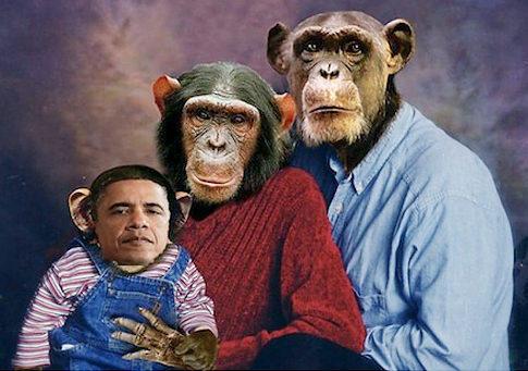 Obama Chimp Photo