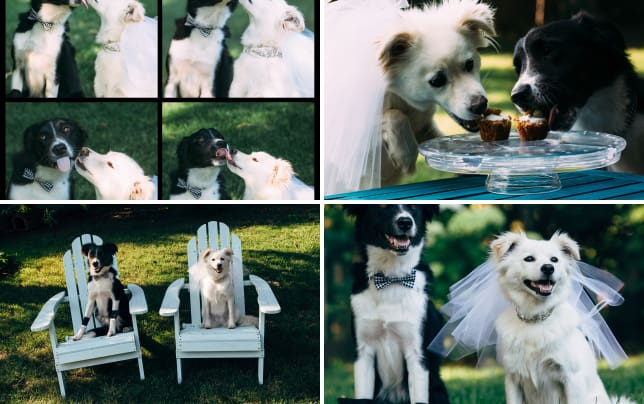 Dog wedding photos we now pronounce you