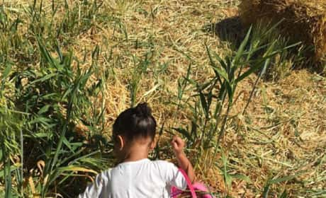 North West Goes Hunting