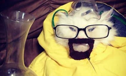 Breaking Cat: Feline Dresses Up Like Walter White