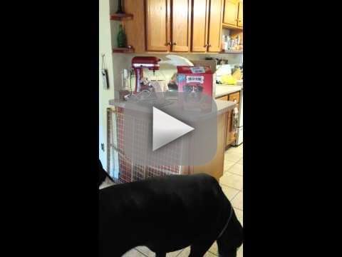 Bird Feeds Dogs