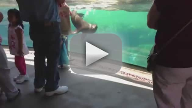 Seal and Little Girl
